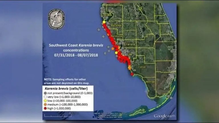 Your Wedding And Florida S Red Tide Outbreak Key Largo Lighthouse